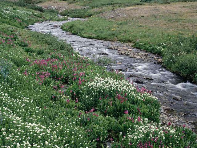 File:Creek5.jpg