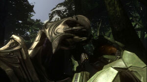 Arbiter Jungle2