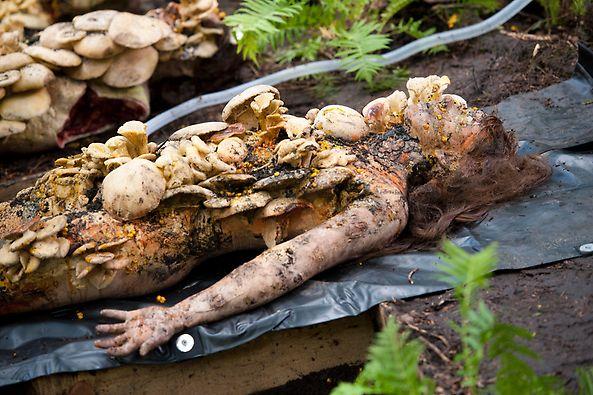 File:1x02 MushroomMan.jpg