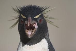 Evil-penguin.jpg