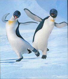 Happy Feet - Mumble and Gloria