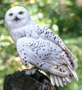 Hedwig WB F3 HedwigInTheForest Still 100615 Port.jpg