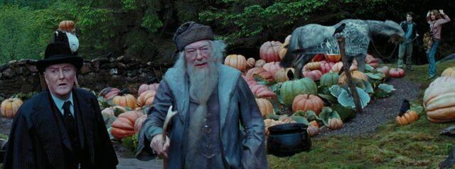 File:Harry & Hermione free Buckbeak.jpg