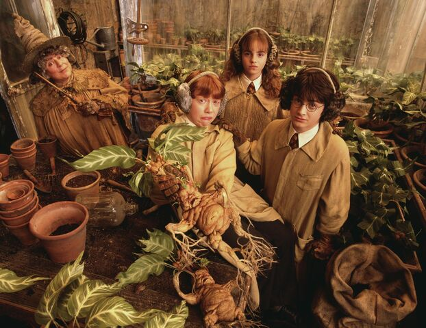 File:Herbology greenhouse.jpg