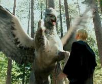 Buckbeak Malfoy