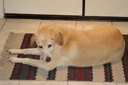 Chelseadog