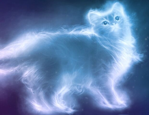 File:Persion patronus cat.jpg