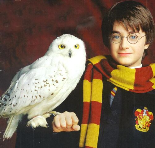 File:Harry-Potter-Hedwig.jpg
