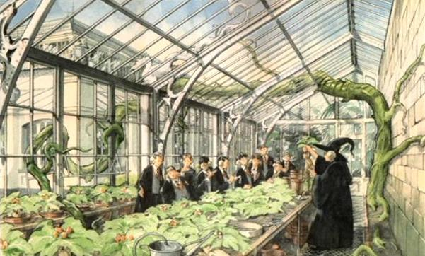 File:Herbology classroom (Concept artwork) 01.JPG