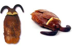 File:Gross harry potter cockroach clusters.jpg
