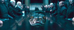 Nagini at Malfoy Manor Dining Table