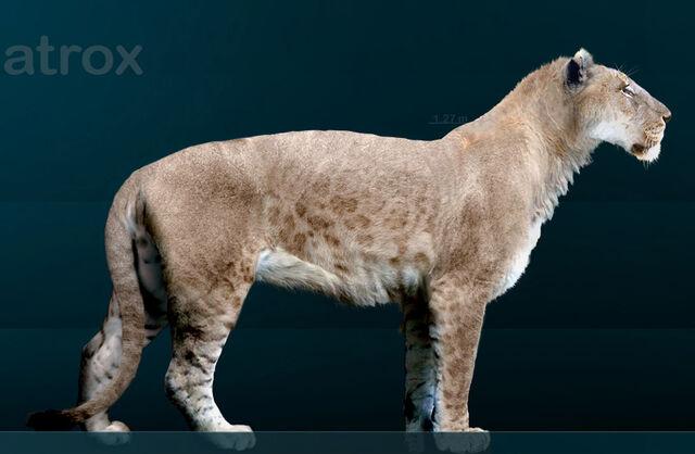 File:Panthera leo atrox.jpg