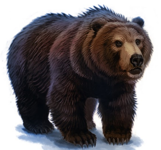 File:Bear.png