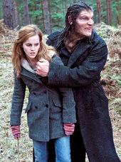 Greybackhermione.jog