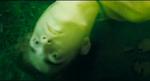 Cedric Dead 1
