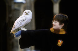 Harry Potter and Hedwig