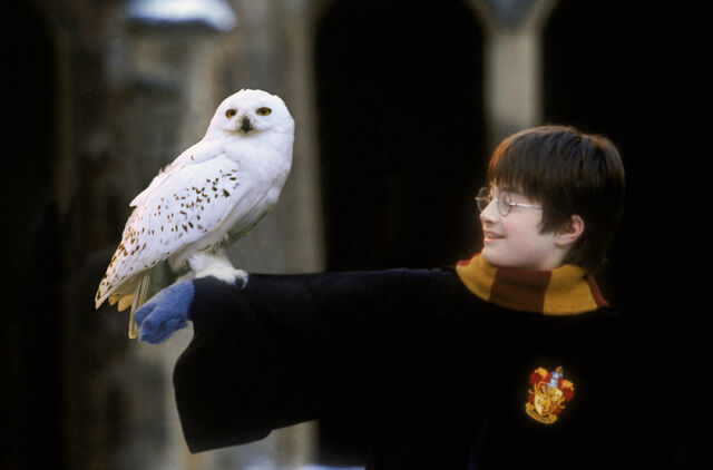 File:Harry Potter and Hedwig.jpg