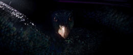 Occamy Fantastic Beasts CC Trailer WM