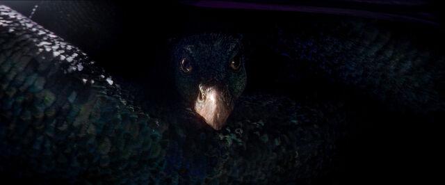 File:Occamy Fantastic Beasts CC Trailer WM.jpg