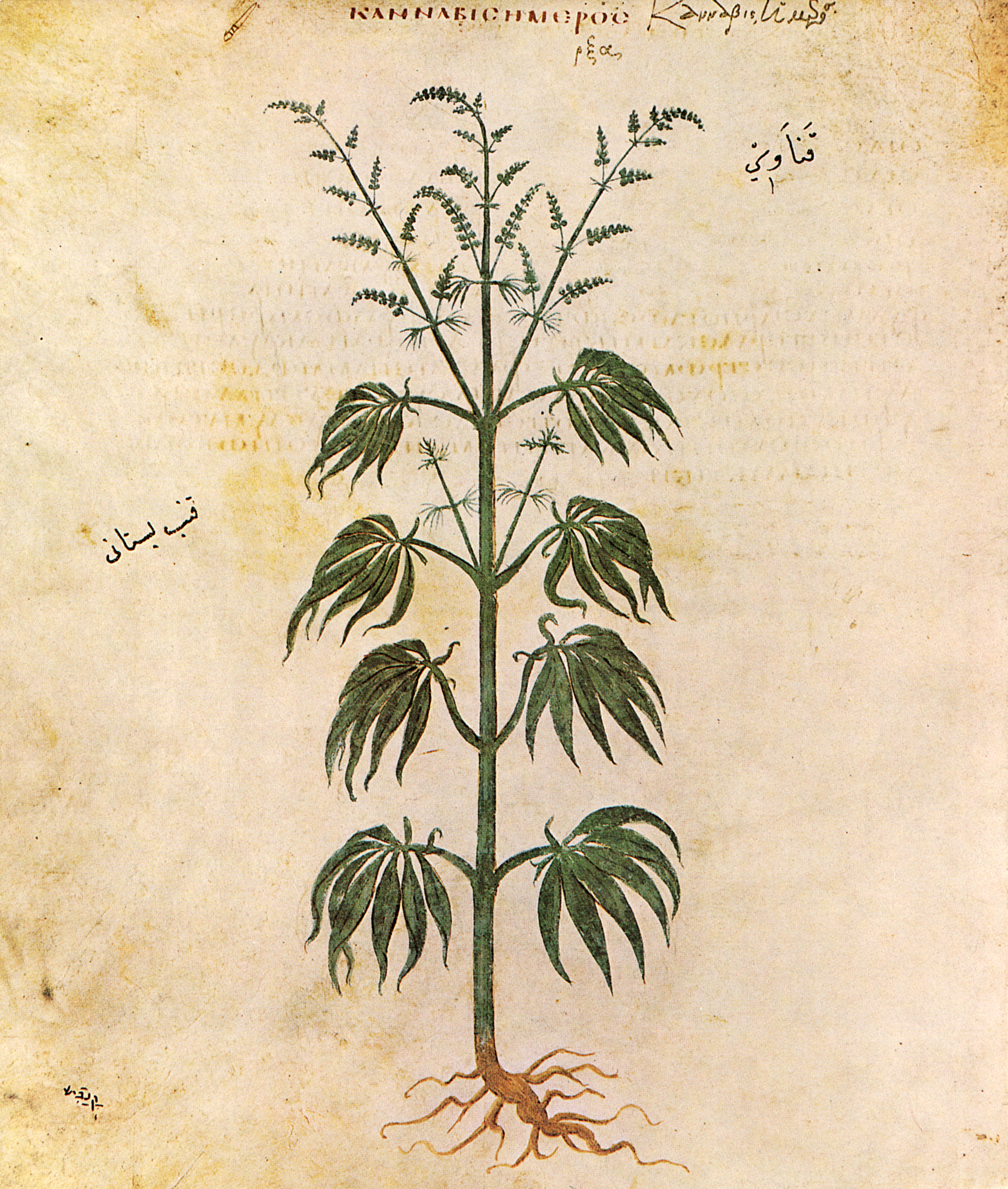 The deadliest medieval order of assassins the hashashins about cannabissativadior biocorpaavc Choice Image