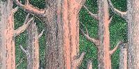 Wheel-tree