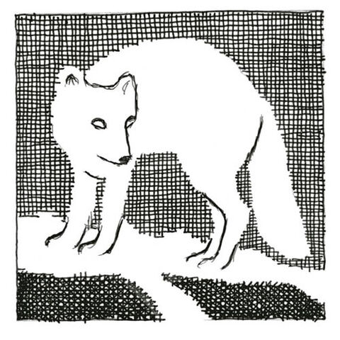File:Amber Spyglass chapter 3 Artic Fox.jpg