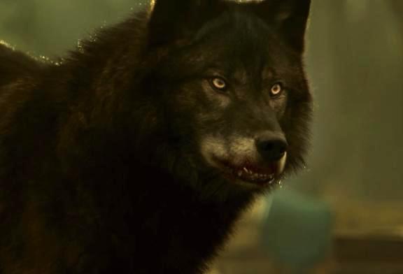 Hemlock Grove Werewolf General Information
