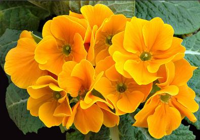 Magnoliophyta 1 | Justin Ratcliff | Flickr