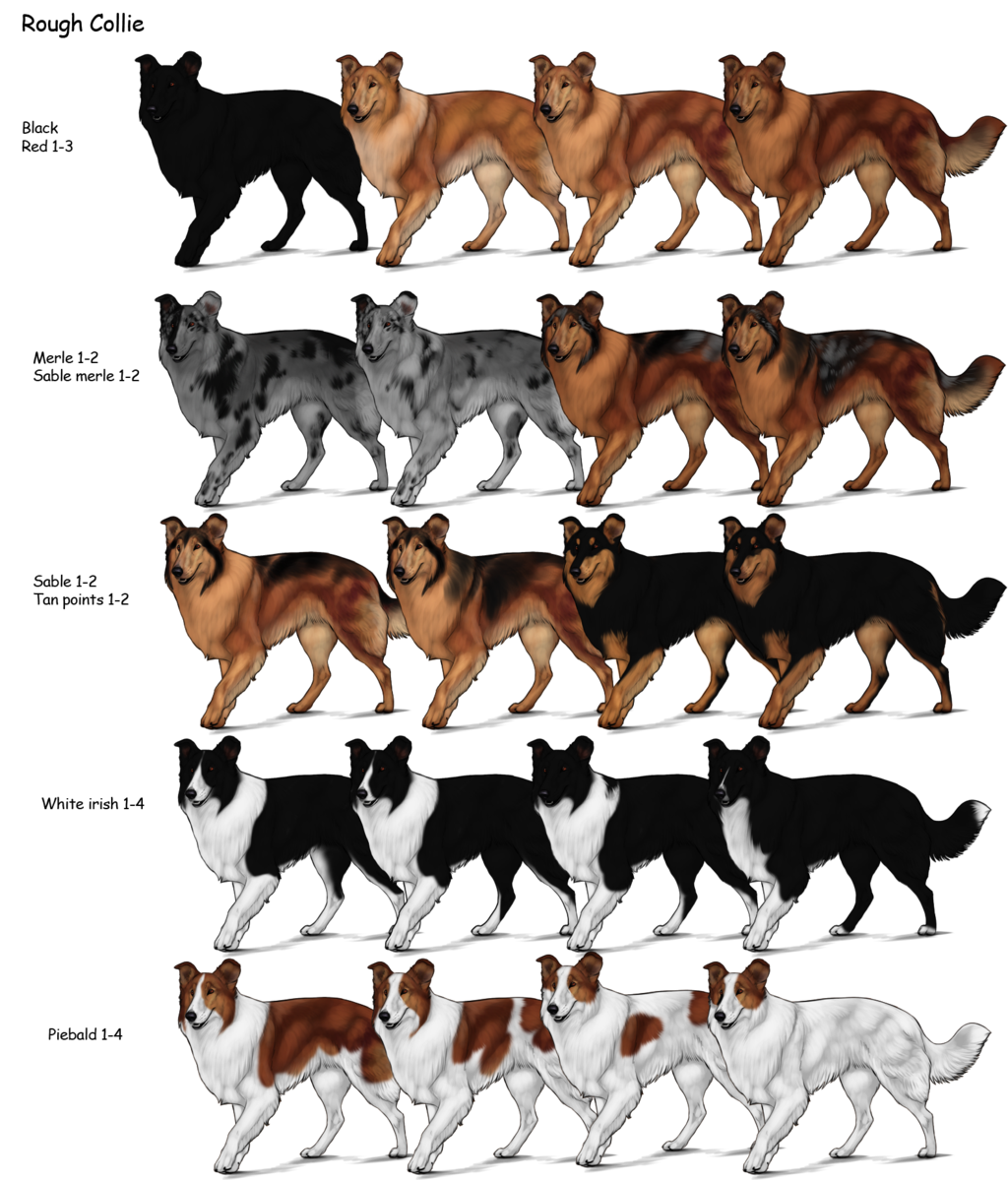 Category Dog Breeds Herding Dog Farms Game Wikia