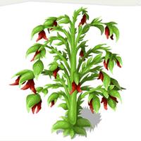 Ghost Chili Pepper Bush
