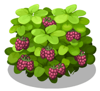 Loganberry Bush