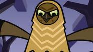 Owls 44