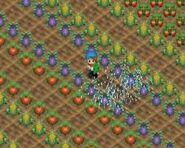 Crops 4