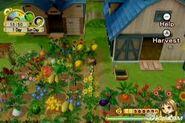 Crops 2