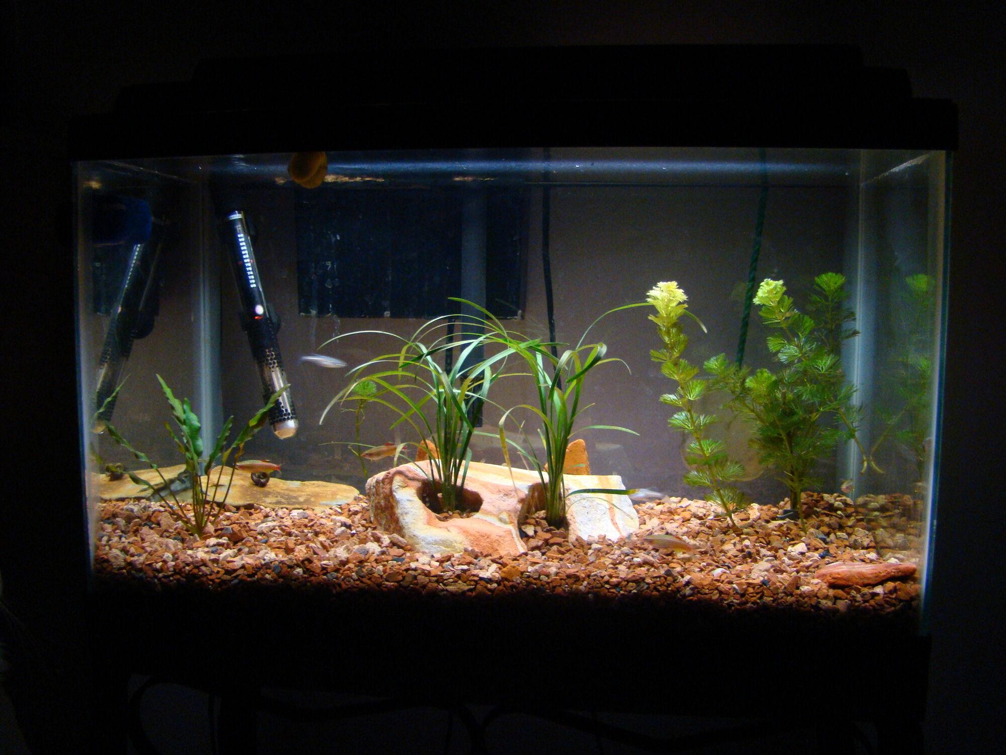 Aquarium Home Wiki Fandom Powered By Wikia