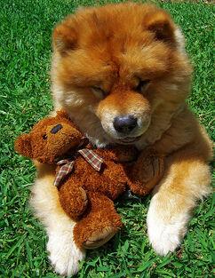 My dog and my teddy =)