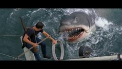 Brody shark