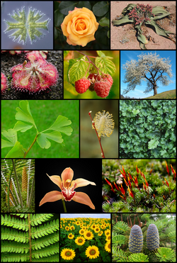 Diversity of plants image version 5