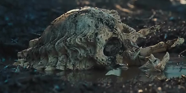 File:Pred-skull-1.png