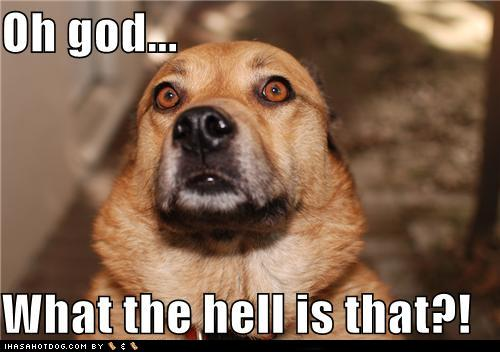 File:D2047 funny-dog-pictures-oh-god-what-the-hell-is-that.jpg