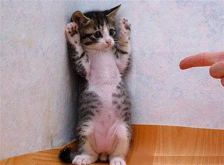 File:I surrender!.jpg