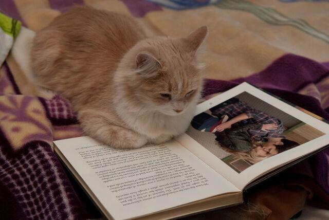 File:Seddie Cat reading Seddie book.jpg