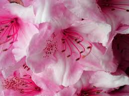 """File:""""A flower cannot blossom without sunshine, and man cannot live without love"""".jpeg"""