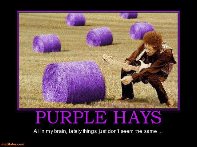 File:Purple hay.jpg