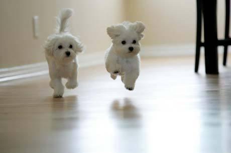 File:Puppies2.jpg