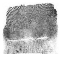 File:Fingerprint.jpg