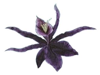 File:Orchidae Nigra.png