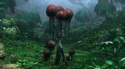 Puffball Tree