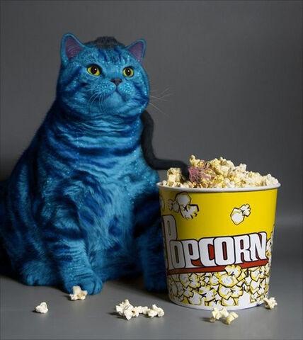 File:AVATAR-CAT.jpg