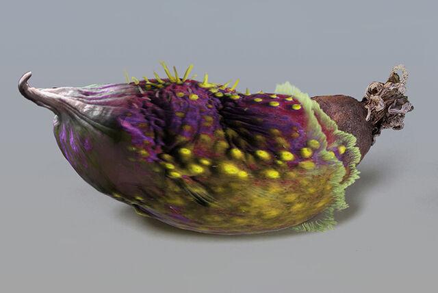 File:Banana fruit.jpg